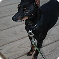 Adopt A Pet :: JJ - Berea, OH