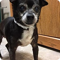 Adopt A Pet :: Coco - The Dalles, OR