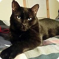 Adopt A Pet :: Phoenix - Toronto, ON