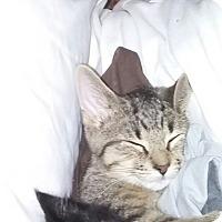 Adopt A Pet :: Heidi - Warren, MI