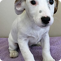 Adopt A Pet :: ADOPTED!!!   Willie - Gahanna, OH