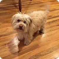 Adopt A Pet :: Barney - Boulder, CO