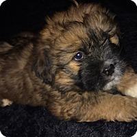 Adopt A Pet :: Abel - SOUTHINGTON, CT