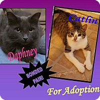 Adopt A Pet :: CATLIN (bonded with Daphney) - THORNHILL, ON