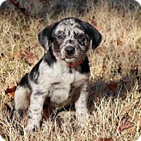 Adopt A Pet :: PUPPY JUNE - Andover, CT