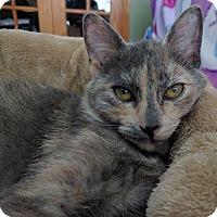 Adopt A Pet :: Veronica - Chaska, MN