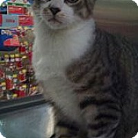 Adopt A Pet :: Roman - Modesto, CA