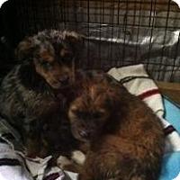 Adopt A Pet :: Molly Mindy and Mandy - Hazard, KY
