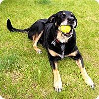 Adopt A Pet :: Emma - Wasilla, AK