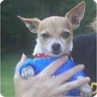 Adopt A Pet :: Bruiser - Pembroke Pines, FL
