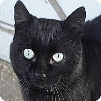 Adopt A Pet :: Buddy - Hyde Park, NY