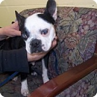 Adopt A Pet :: Rainey - Crawfordville, FL