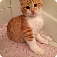 Adopt A Pet :: Leo - Long Beach, NY
