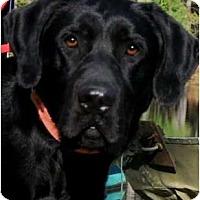 Adopt A Pet :: BRADY - Hendersonville, TN