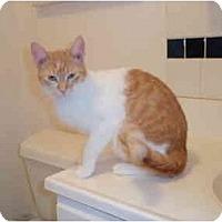Adopt A Pet :: Lilly - San Ramon, CA