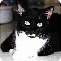 Adopt A Pet :: Bosco - Medway, MA
