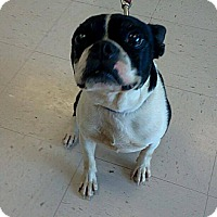 Adopt A Pet :: Sparkplug - La Follette, TN