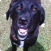 Adopt A Pet :: Maggie - Lewisville, IN