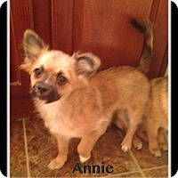 Adopt A Pet :: Annie - Indian Trail, NC