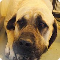 Adopt A Pet :: Cassidy - Prole, IA