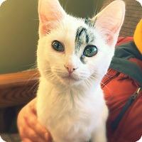 Adopt A Pet :: Kiersa - Green Bay, WI