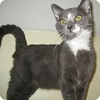 Adopt A Pet :: Bruce - Bedford, VA