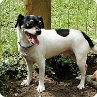 Adopt A Pet :: Poppy - Freeport, FL