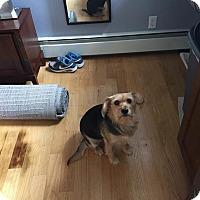 Adopt A Pet :: Max - Brewster, NY
