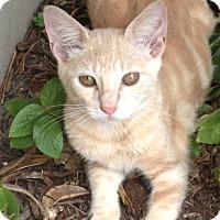 Adopt A Pet :: Jimmy Choo - Delray Beach, FL