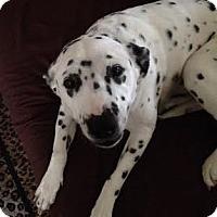 Adopt A Pet :: Kaylee - Turlock, CA