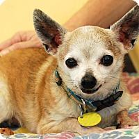 Adopt A Pet :: Cannoli - Garland, TX