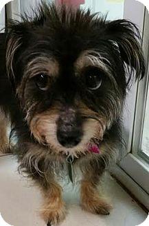 Small Dog Adoption Philadelphia