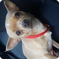 Adopt A Pet :: Toby - Edmond, OK
