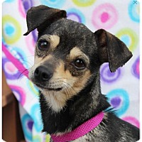 Adopt A Pet :: MARLA - Red Bluff, CA