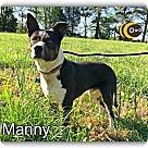 Adopt A Pet :: Manny Pants