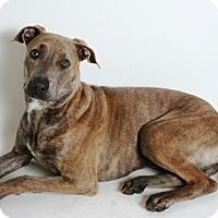 Adopt A Pet :: Lucy - Redding, CA