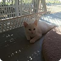 Adopt A Pet :: Aspen - Yucaipa, CA
