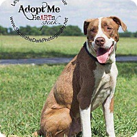 Adopt A Pet :: Lex - Broken Arrow, OK