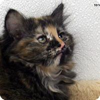 Adopt A Pet :: Maroon - Republic, WA