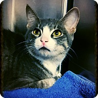 Adopt A Pet :: Squidward - Los Alamitos, CA