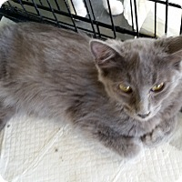 Adopt A Pet :: Verity - Fairborn, OH