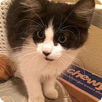 Adopt A Pet :: Frannie - Davis, CA