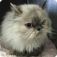 Adopt A Pet :: Peanut - Davis, CA