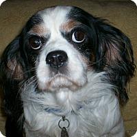 Adopt A Pet :: Benjamin - Sullivan, MO