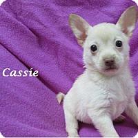 Adopt A Pet :: Cassie - Bartonsville, PA