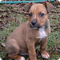 Adopt A Pet :: Poe CC - Providence, RI