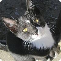 Adopt A Pet :: Tiki - Buhl, ID