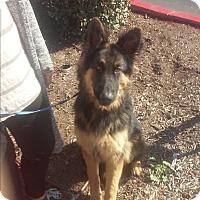 Adopt A Pet :: Klaus - El Cajon, CA