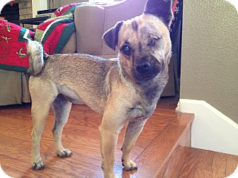 Pug Mix Dog for adoption in Austin, Texas - Rita