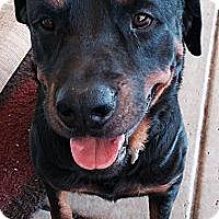 Adopt A Pet :: Viper - Gilbert, AZ